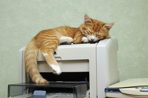 kitten sleeping on the printer