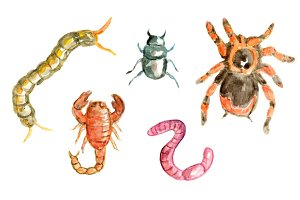 Watercolor Insects Halloween