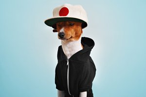 Cute dog dressed in hoodie and trucker hat