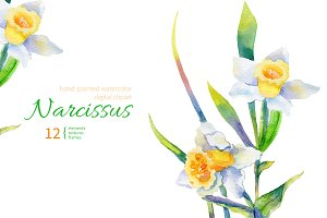 Watercolor Narcissus Set