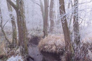 Small Creek in Winter Forest