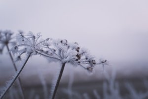 Beautiful Ice Flowers in Winter