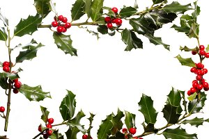 Framed holly background