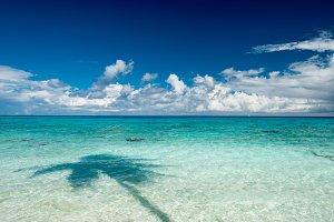 Beach, ocean and palm tree shadow