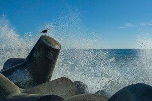 Seagull with Ocean Spray