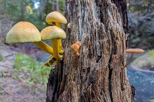 Mushrooms Growing on Log