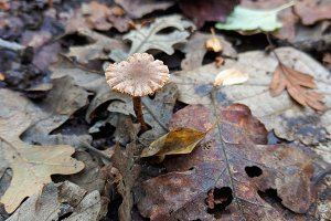 Tiny Mushrooms on Forest Floor