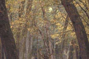 Deer in an  forest autumn
