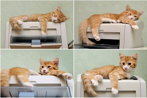 kitten sleeping on the printer