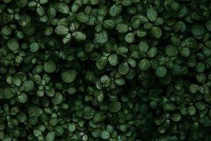 Green Plants Close Up - Photanicals