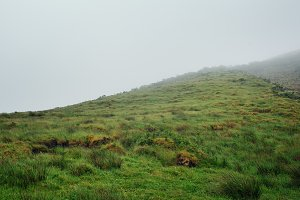 meadow grass covered morning fog