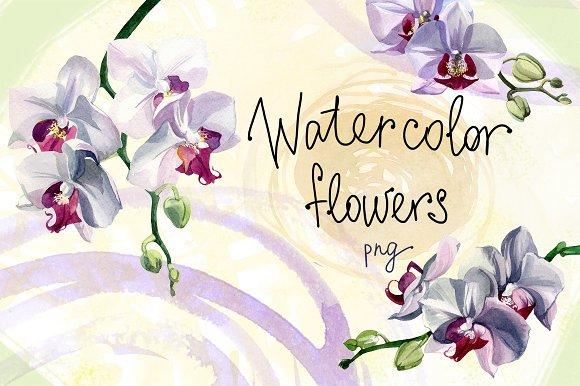 Watercolor Flowers Set Orchids