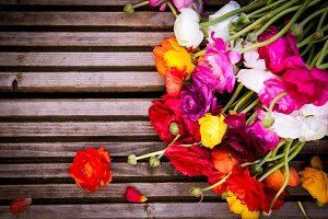 Beautiful Ranunculus