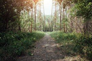 Green wood landscape