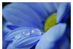 Floral PRINTABLE CALENDAR 2017