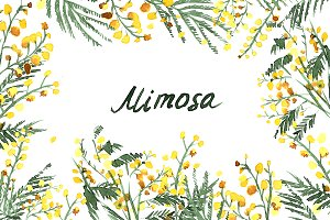 №218 Mimosa Watercolor