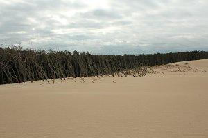 Dune 002