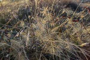 Dry grass selective focus