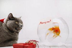 Merry me?