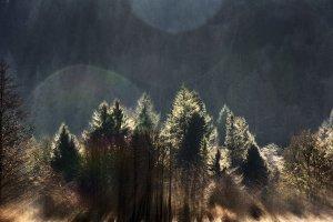 Winter Trees in Sunlight