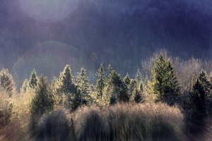 Winter Trees with Mountainside