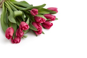 Tulips bouquet on a white background