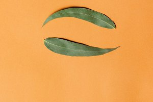 Yin yang symbol from green eucalyptus leaves on orange background. Flat lay.