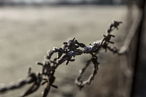 Frosty Barbed Wire