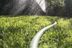 Garden hose and sprayer