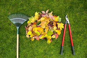 Rake on a wooden stick, garden shears and Colored  autumn foliage. Collecting grass clippings. Garden tools.