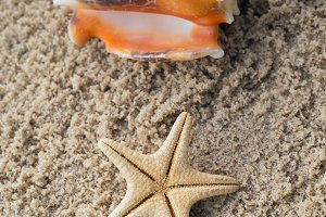 Starfish and conch on sand