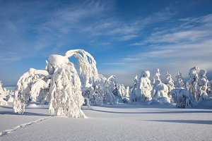 Sunny winter landscape in Lapland