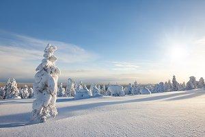 Sunny winter landscape in Lapland
