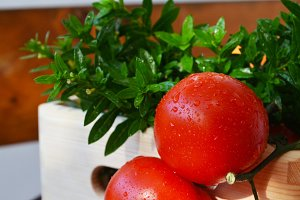 Fresh tomatoes and leaves in a bucke
