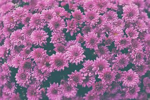☼ Pink flowers