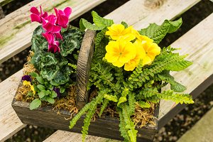 Flower basket with primrose