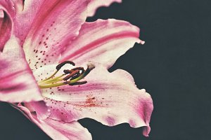 FLORAL HERO PINK LILY