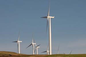 Wind mills producing electricity