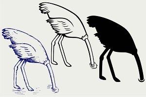Ostrich SVG