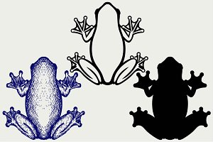 Marsh frog SVG