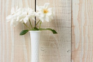 White Rose White Vase White Wall