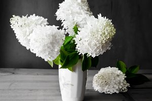 Bouquet of white hydrangea flowers