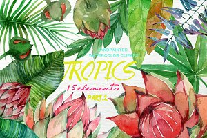 Exotic Watercolor Floral Clip Art