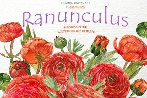 Ranunculus Clip Art Hand Drawn PNG