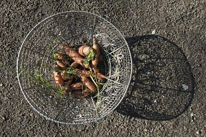 Carrots in metal basket