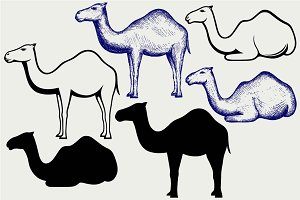 Standing and lying camels SVG