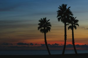Palms on the beach