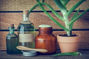 Aloe plant, essence and cream