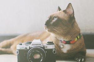 Cat and film camera