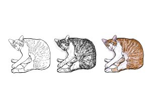 Laying down cat.vector illustration